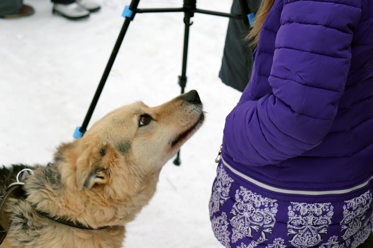 Меди@Город на базе реабилитации для пострадавших животных