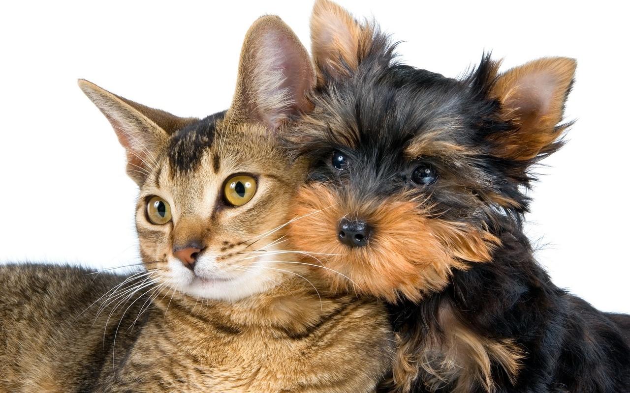 Ко Всемирному дню домашних животных занятие по теме: «Домашние питомцы — наши верные друзья»